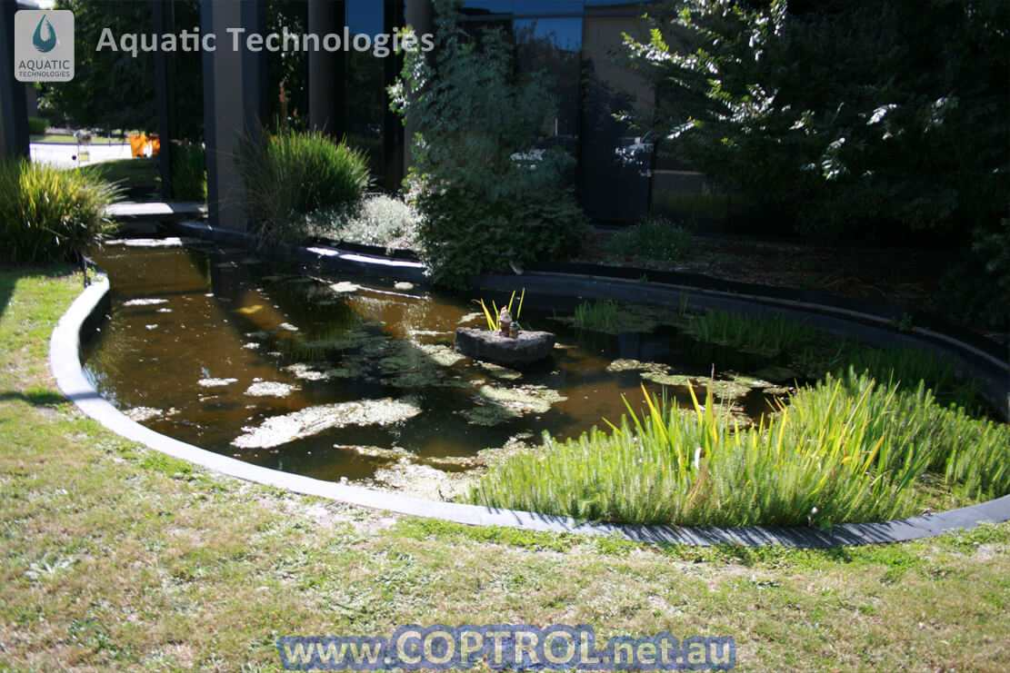 Ornamental ponds 100 images ponds clio mi creative for Ornamental pond