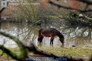 Aquatic-Technologies-using-coptrol-with-livestock